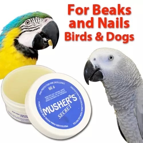 Nail & Beak Cleaner and Shiner – Great For bird Grooming