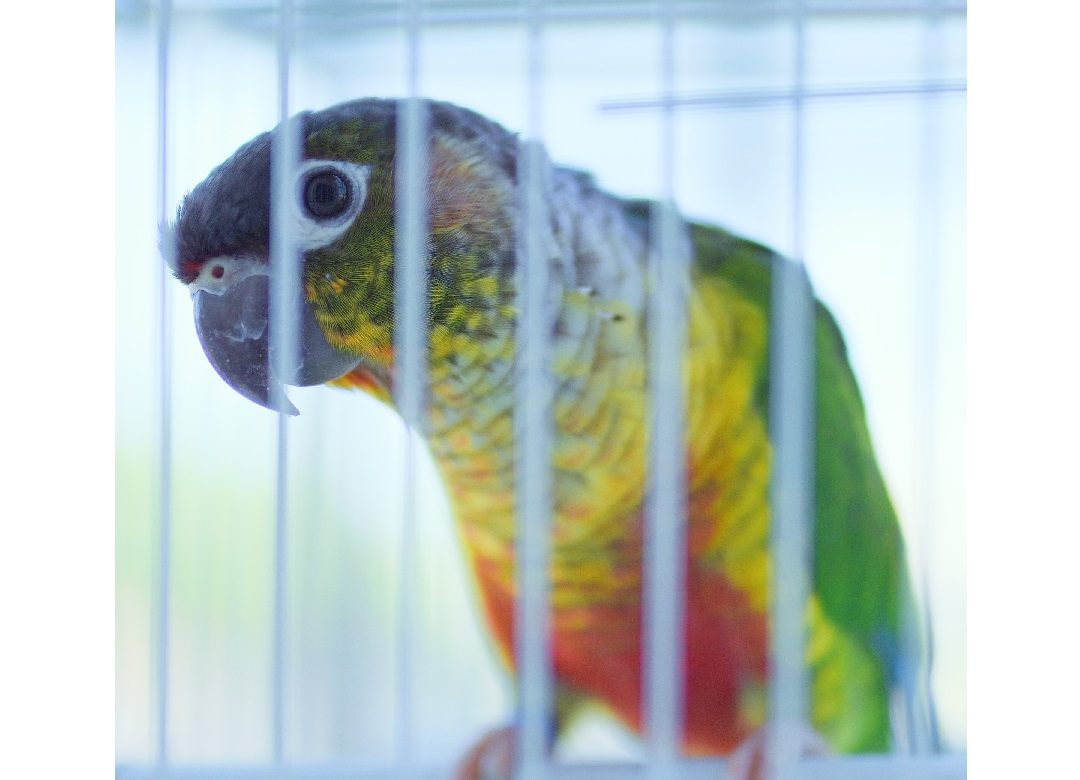 Which Cage is Right for Your Bird