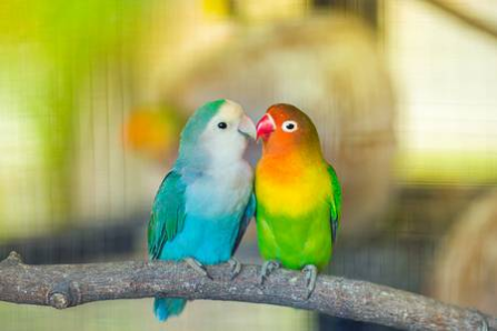WHICH CAGE IS RIGHT FOR YOUR BIRD?