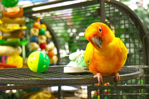 Bored Birds_ Rearrange the Inside of Their Cage