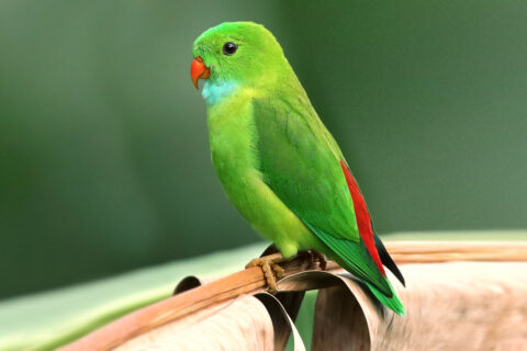 Nifty Facts About Parrots